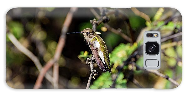 Sleepy Hummingbird Galaxy Case