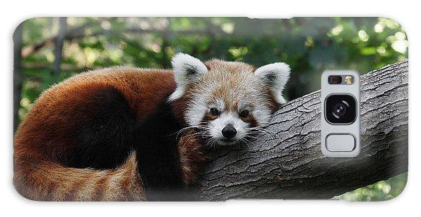 Sleepy Red Panda Galaxy Case