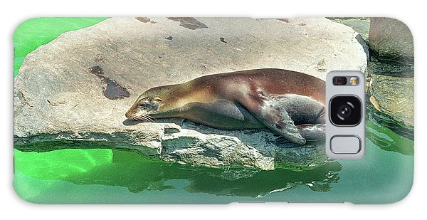 Sleepy Sea Lion Galaxy Case