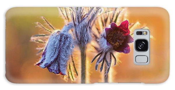Small Pasque Flower, Pulsatilla Pratensis Nigricans Galaxy Case
