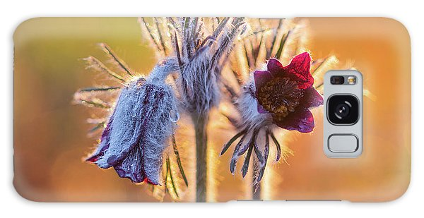Galaxy Case featuring the photograph Small Pasque Flower, Pulsatilla Pratensis Nigricans by Davor Zerjav