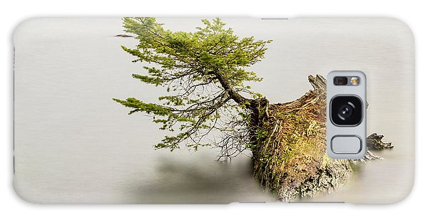 Small Tree On A Stump Galaxy Case