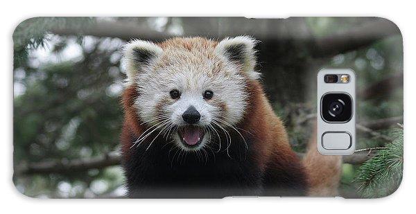 Smiling Red Panda #2 Galaxy Case