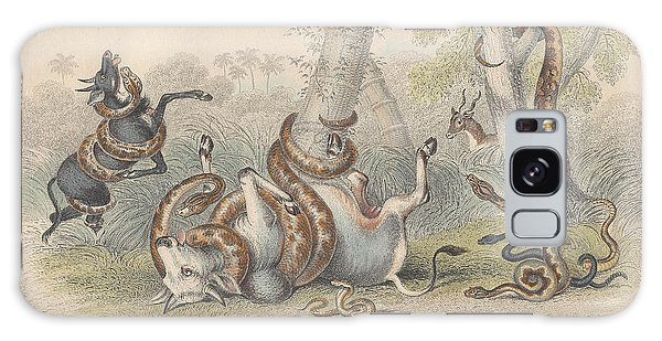 Boa Constrictor Galaxy Case - Snakes by Dreyer Wildlife Print Collections