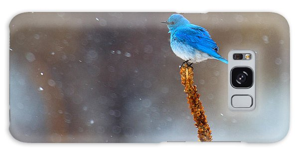 Snow Bird Galaxy Case