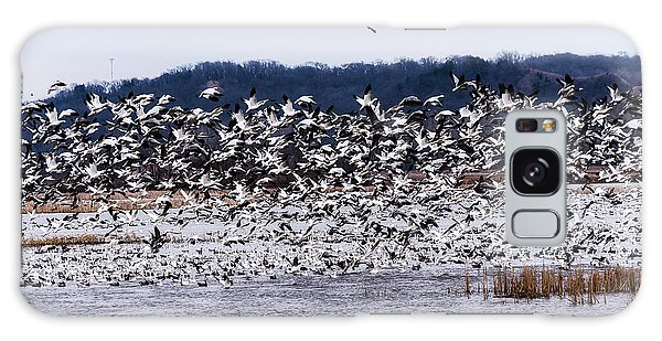 Snow Geese At Squaw Creek Galaxy Case by Edward Peterson