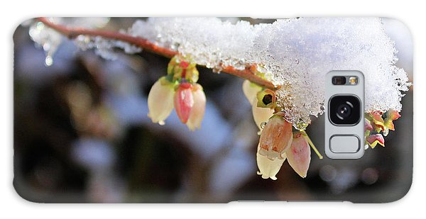 Snow On Blueberry Blossoms Galaxy Case by Kristin Elmquist