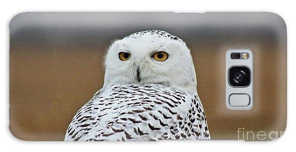 Snow Owl Strare Galaxy Case