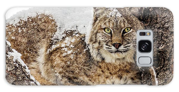 Snowy Bobcat Galaxy Case