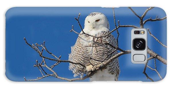 Snowy Owl 7 Galaxy Case