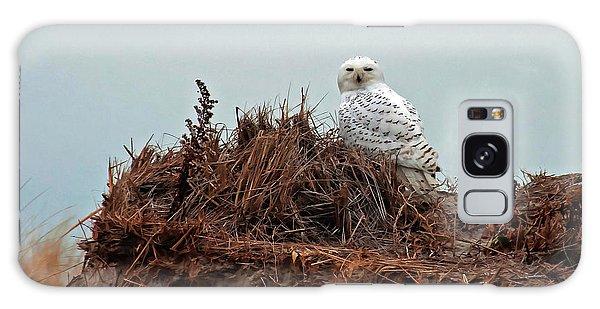 Snowy Owl In Dunes Galaxy Case