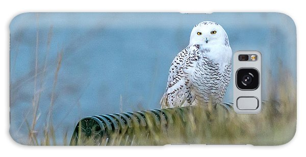 Snowy Owl On A Park Bench Galaxy Case