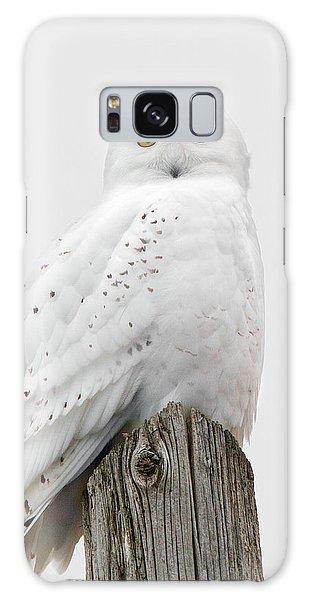 Snowy Owl Portrait Galaxy Case by Timothy McIntyre