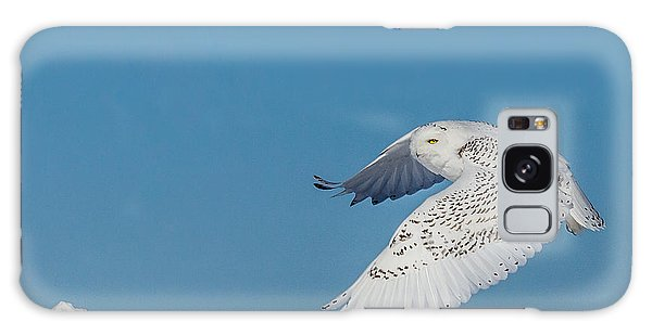 Snowy Owl - Taking Flighty Galaxy Case by Dan Traun