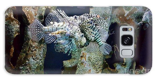 Socializing Fish Galaxy Case