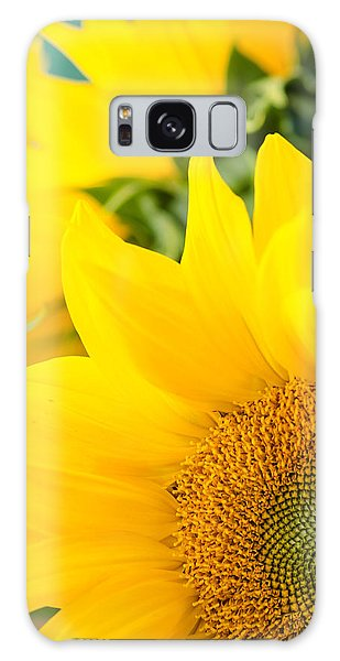Soft Sunflowers Galaxy Case