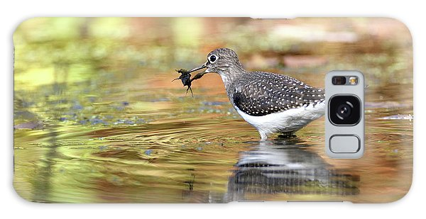 Solitary Sandpiper With Belostomatide Galaxy Case