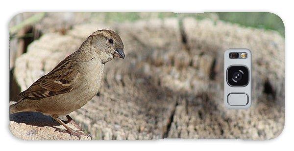 Song Sparrow Looks Curious Galaxy Case