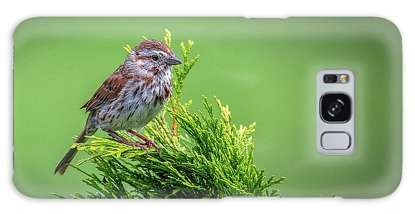 Song Sparrow Perched - Melospiza Melodia Galaxy Case