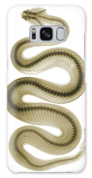 Viper Galaxy S8 Case - Southern Pacific Rattlesnake, X-ray by Ted Kinsman