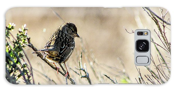 Snarky Sparrow Galaxy Case