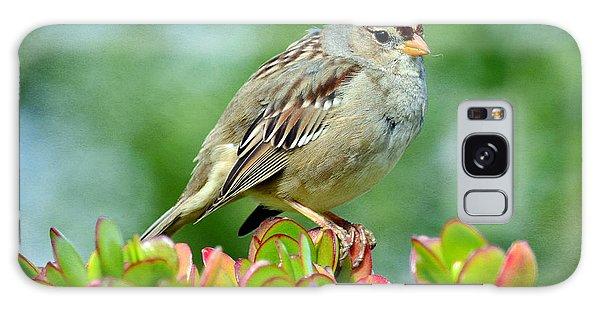 Sparrow Song 9 Galaxy Case