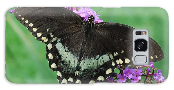 Spicebush Swallowtail Galaxy Case