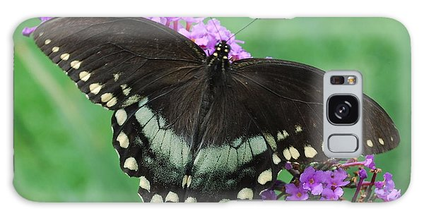 Spicebush Swallowtail Galaxy Case by Randy Bodkins