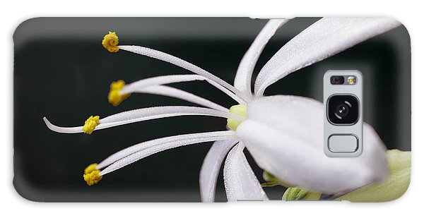 Spider Plant Flower Galaxy Case