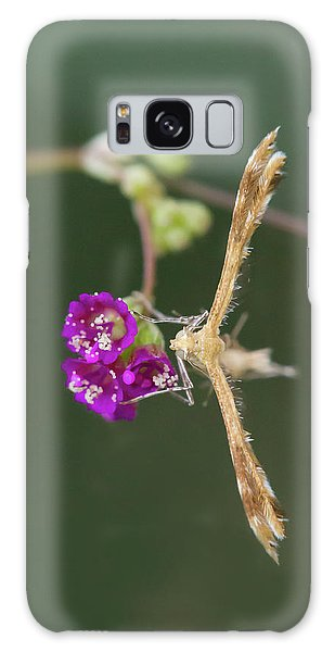 Spiderling Plume Moth On Wineflower Galaxy Case