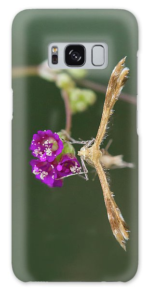 Spiderling Plume Moth On Wineflower Galaxy Case
