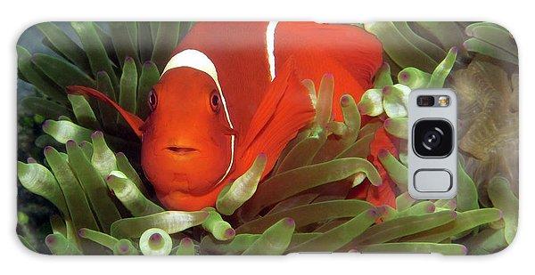 Spinecheek Anemonefish, Indonesia 2 Galaxy Case