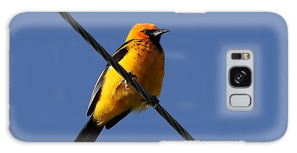 Spot Breasted Oriole Galaxy Case