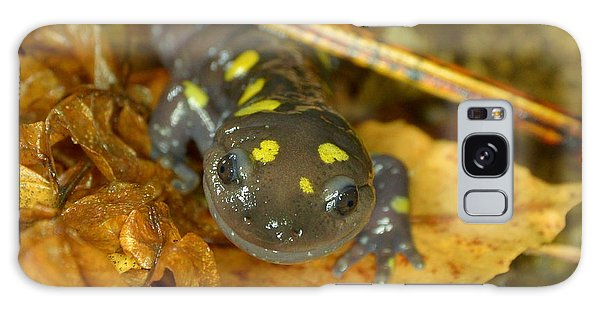 Spotted Salamander Galaxy Case