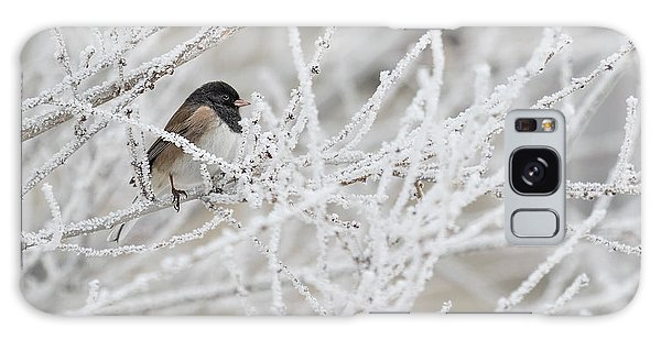 Spotted Towhee In Winter Galaxy Case