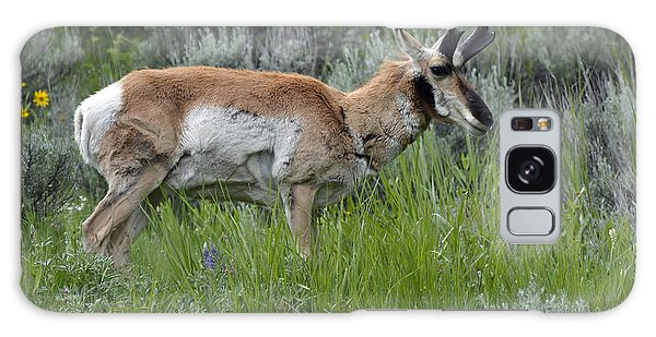 Spring Antelope Galaxy Case by Bruce Gourley