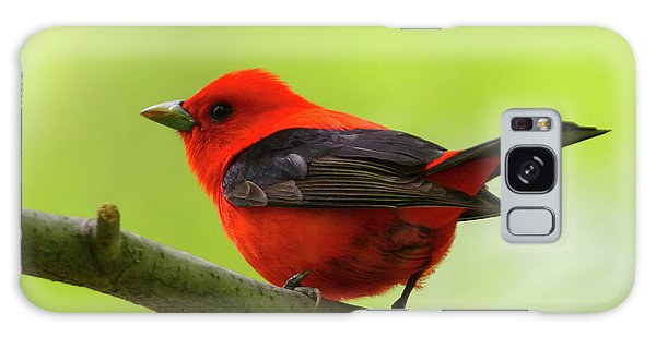 Spring Flame - Scarlet Tanager Galaxy Case