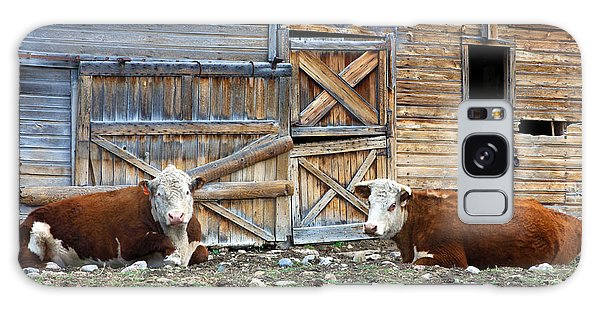 Squires Herefords By The Rustic Barn Galaxy Case
