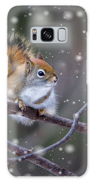 Squirrel Balancing Act Galaxy Case by Patti Deters