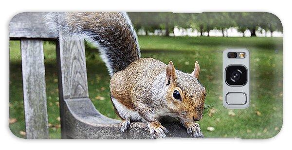 Squirrel Bench Galaxy Case