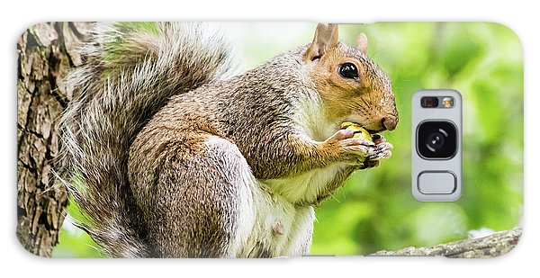 Squirrel Eating On A Branch Galaxy Case