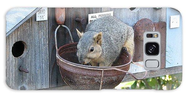 Squirrel Feeding Galaxy Case