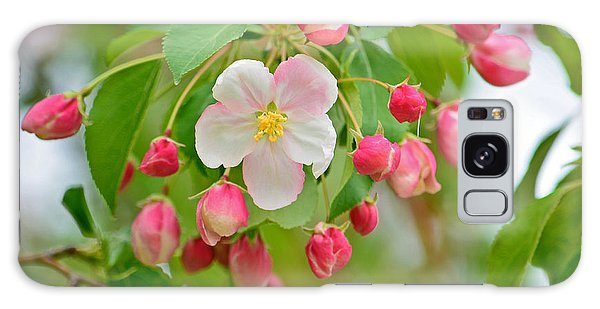 Stand Alone Japanese Cherry Blossom Galaxy Case