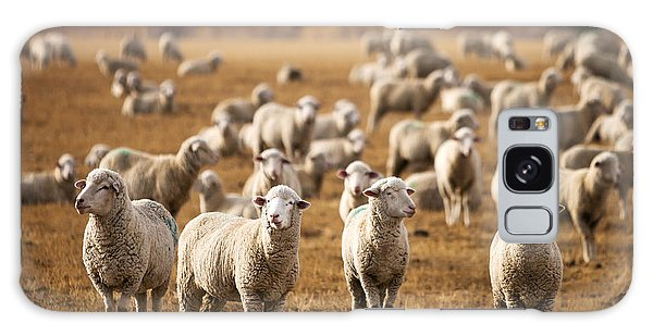 Sheep Galaxy S8 Case - Standing Out In The Herd by Todd Klassy