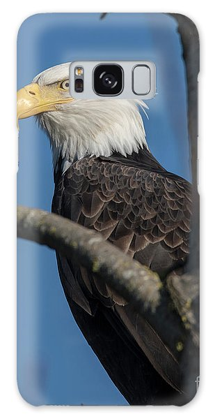 Staredown By Eagle  Galaxy Case
