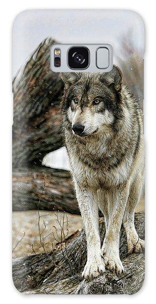 Still Wolf Galaxy Case