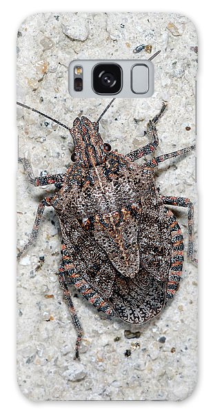 Stink Bug Galaxy Case