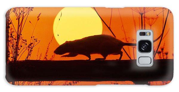 Stranglers Rattus Norvegicus Rat Galaxy Case