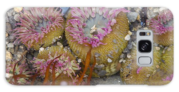 Strawberry Anemonies Galaxy Case