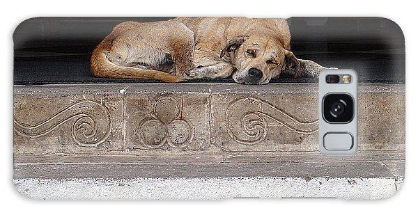 Galaxy Case featuring the photograph Street Dog Sleeping On Steps by Karen Zuk Rosenblatt